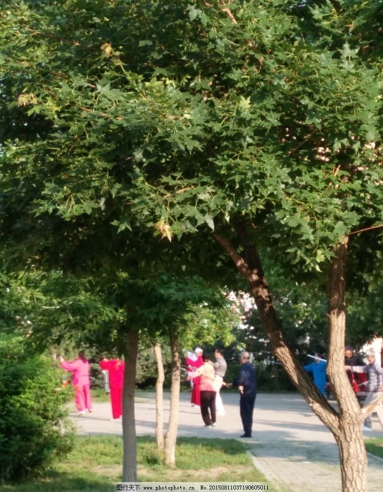 晨练 打剑 树林 公园 老人 广场 太极剑      摄影 生活百科 娱乐休