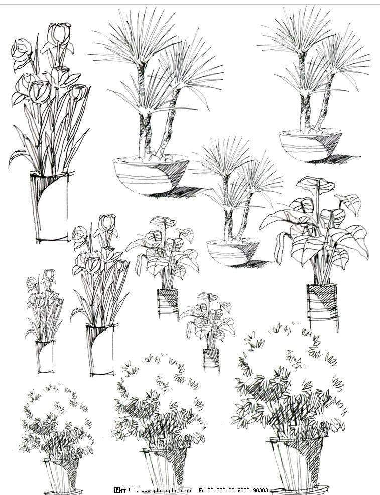 手绘 植物 线稿 黑白 园林景观