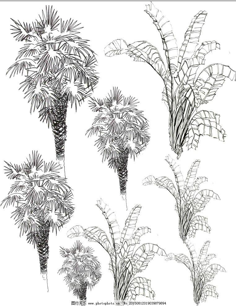 热带植物 手绘 园林景观