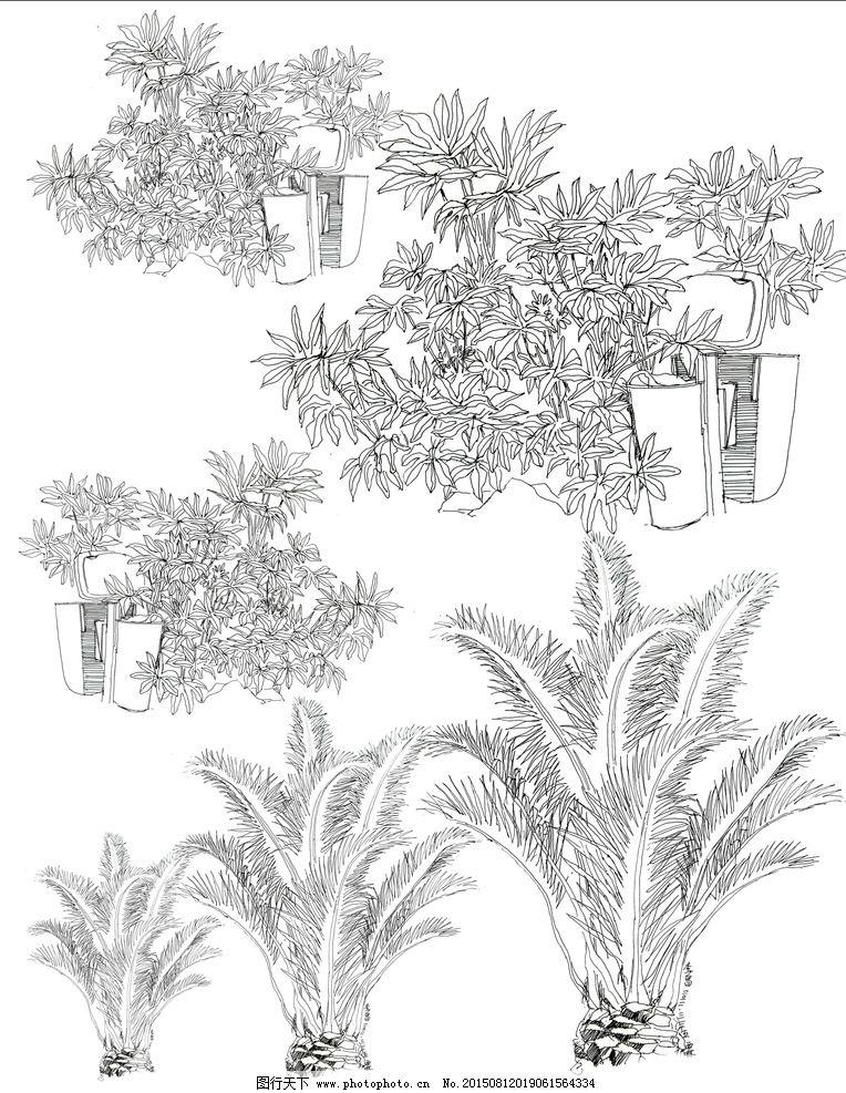 植物 手绘 教材 线稿 黑白