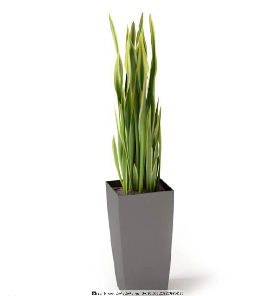 花草 植物 植物模型 盆栽 花卉 花 树 花模型 叶子模型 室内植物 花盆