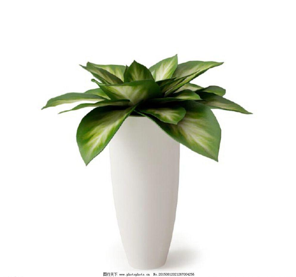 植物模型 盆栽 花卉 花 树 花模型 叶子模型 室内植物 花盆 环艺设计