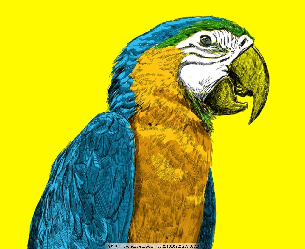 壁纸 动物 鸟 鹦鹉 1024_837