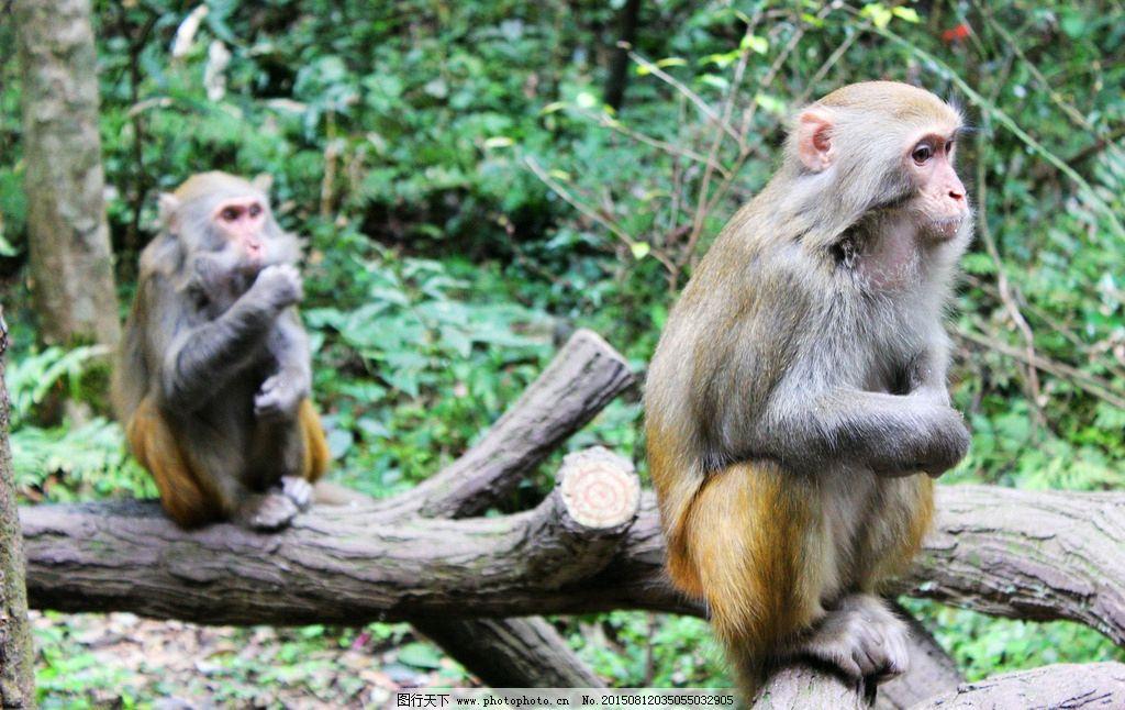 铅笔画树上的猴子_绘画分享