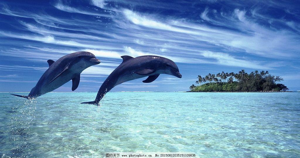 壁纸 动物 海洋动物 桌面 1024_539