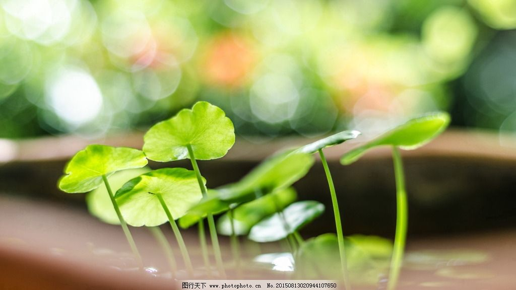 绿色叶子小清新背景图片