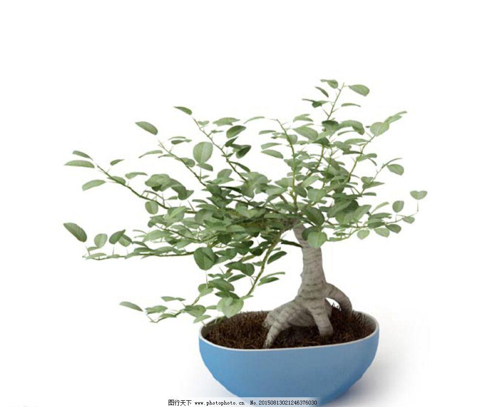 植物 植物模型 盆栽 花卉 花 树 花模型 叶子模型 室内植物 花盆 环艺
