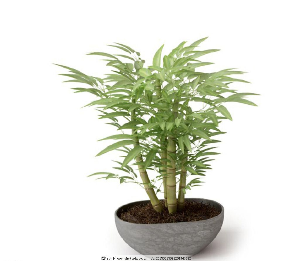 植物 植物模型 盆栽 花卉 花