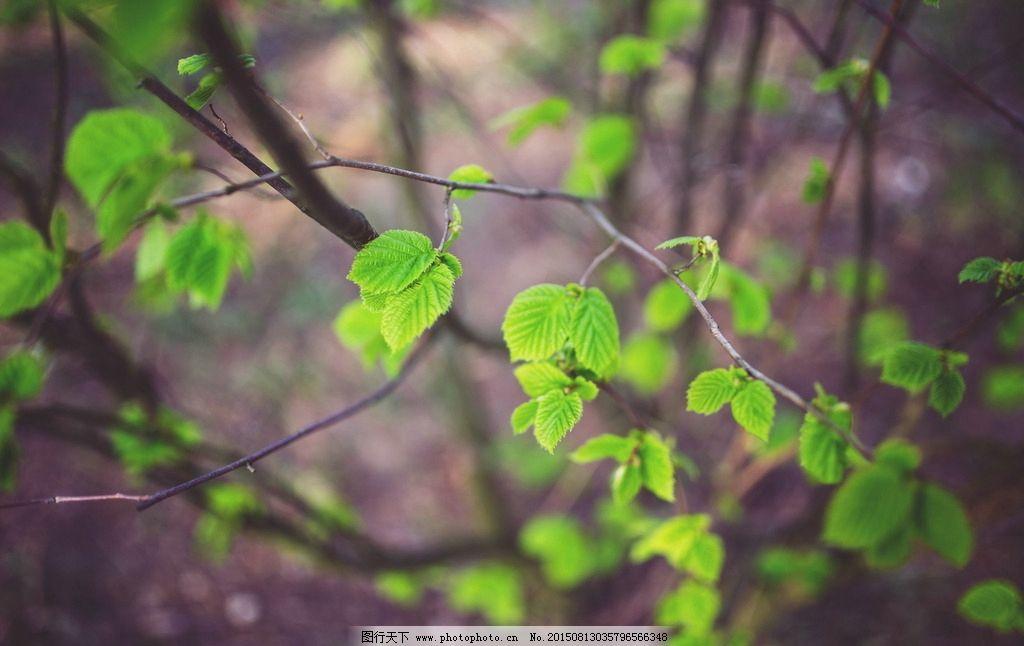 绿色 文艺 小清新 绿叶 叶子 蔓藤 藤蔓 绿色清新 植物 植被 文艺风