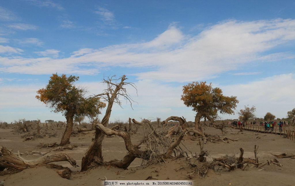 怪树林图片,枯树 老树 沙漠里的树 胡杨树 西北胡杨林
