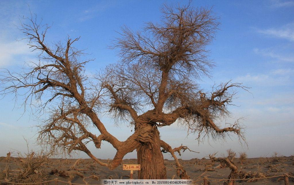 怪树林图片,枯树 老树 沙漠里的树 胡杨树 夕阳 西北