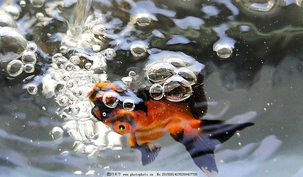 手绘金鱼与气泡