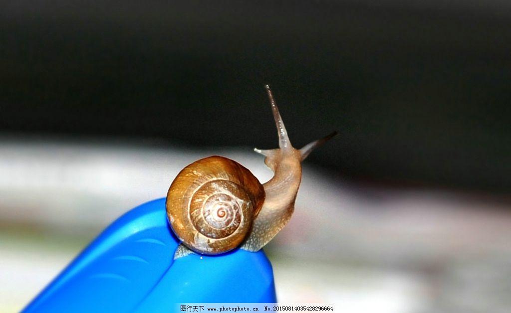 蜗牛 动物 绿叶 爬 昆虫 生物世界 摄影 生物世界 昆虫 300dpi jpg
