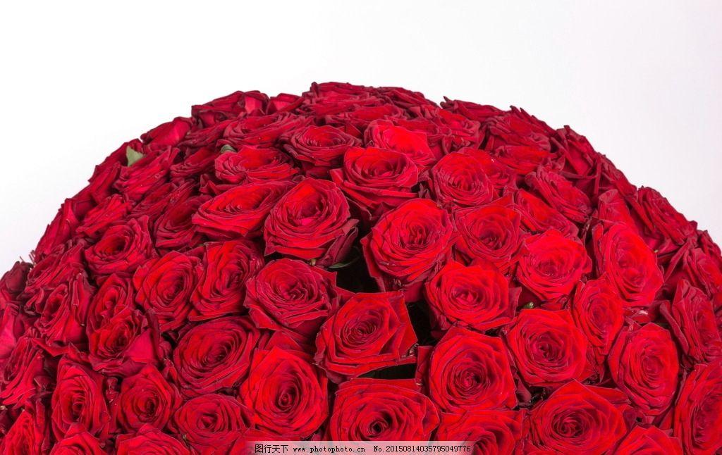 红色花朵 玫瑰花 鲜花 花球 红玫瑰 玫瑰 红花 红色 花卉 花朵 花瓣