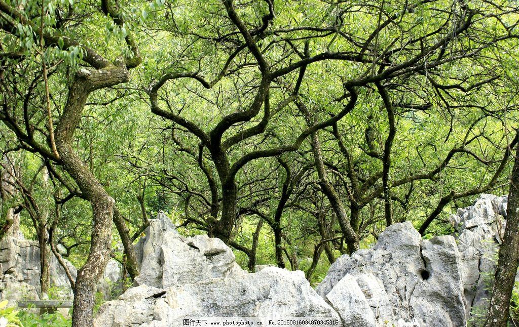 园林山石林木图片