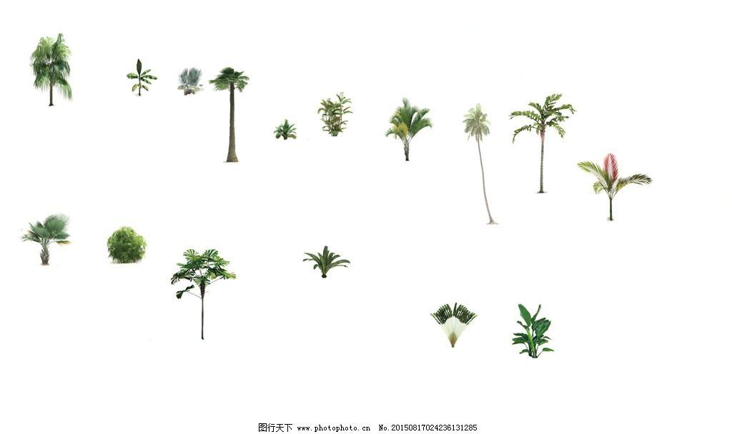 热带植物竖向图片