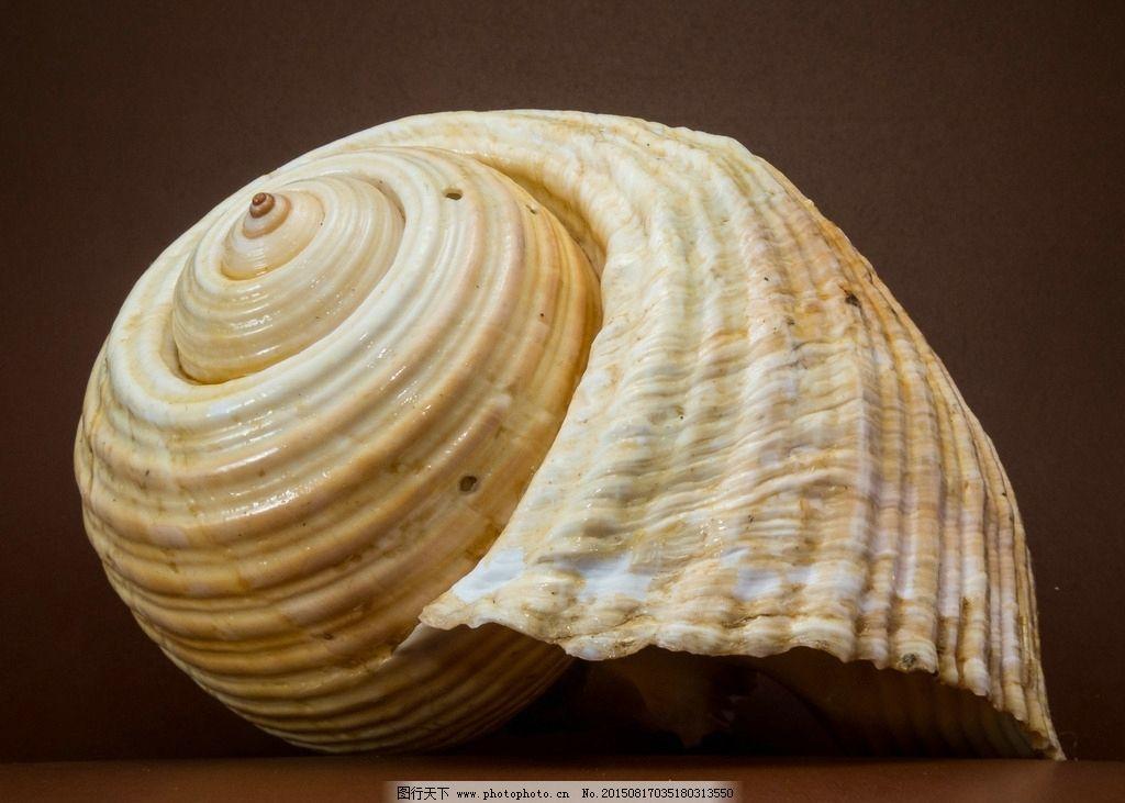 贝壳写真 海螺 沙滩贝壳 海洋贝壳 漂亮贝壳 沙滩上的贝壳 海滩贝壳