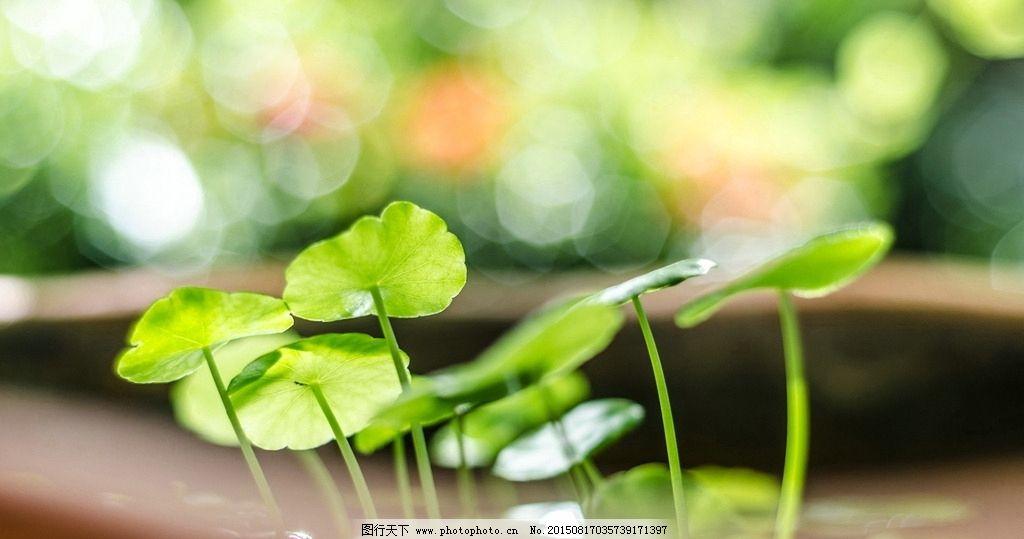 嫩芽 绿叶 叶子 幼苗 植物 植被 绿色植物 唯美 清新非主流 背景 底纹
