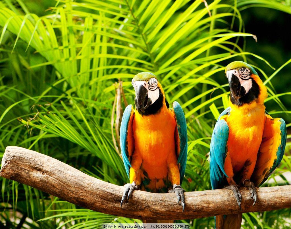 唯美 炫酷 动物 鸟类 野生 鹦鹉 可爱鹦鹉 摄影 生物世界 鸟类 300dpi