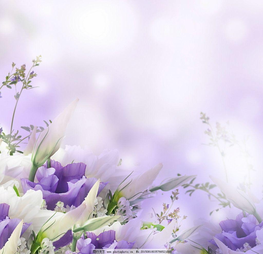 紫色小清新背景 紫色花朵 鲜花 植物 唯美 淡雅 花卉背景 底纹