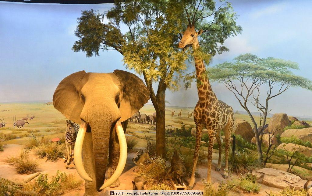 非洲森林图片_野生动物_生物世界_图行天下图库