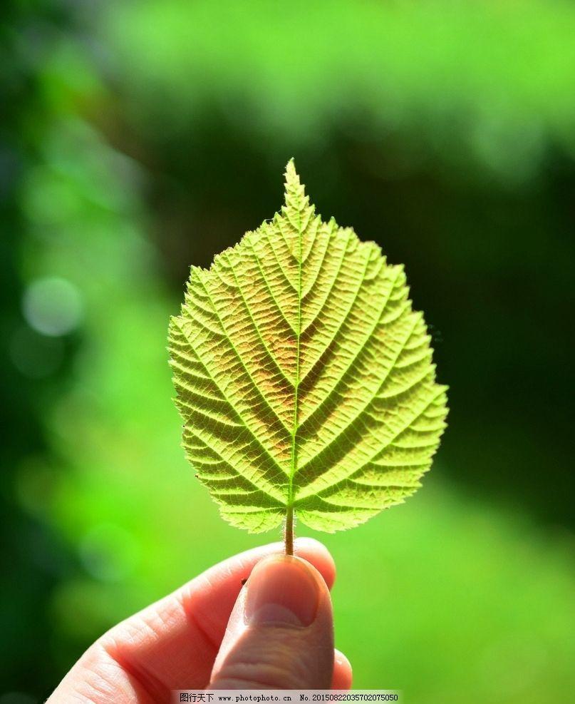 树叶图片_花草_生物世界_图行天下图库
