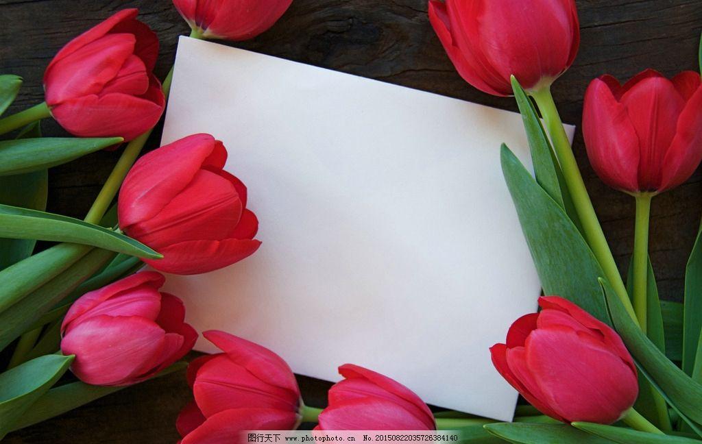 玫瑰花 边框 唯美 照片 相框 花朵 摄影 生物世界 花草 300dpi jpg