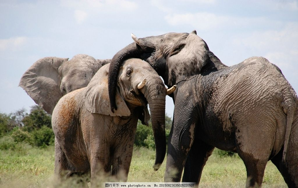 象 大象 大象摄影 野生大象 野生动物 非洲 非洲大象 动物 动物 摄影