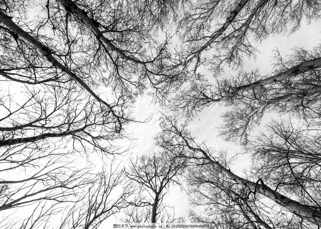 树木 森林 黑白 影子 幽深 摄影 生物世界 树木树叶 300dpi jpg