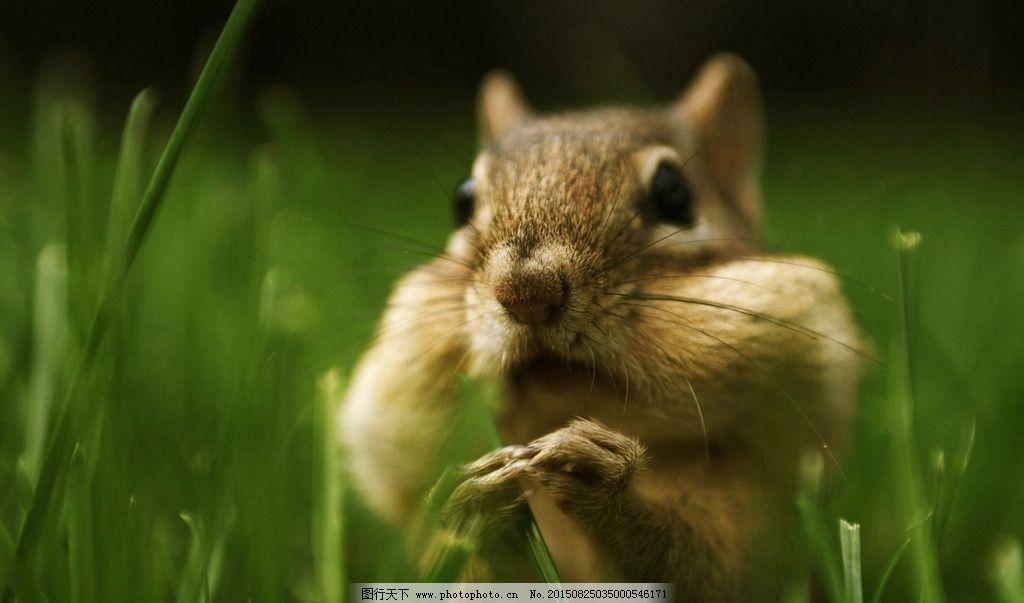 可爱小松鼠墙纸图片_野生动物_生物世界_图行天下图库