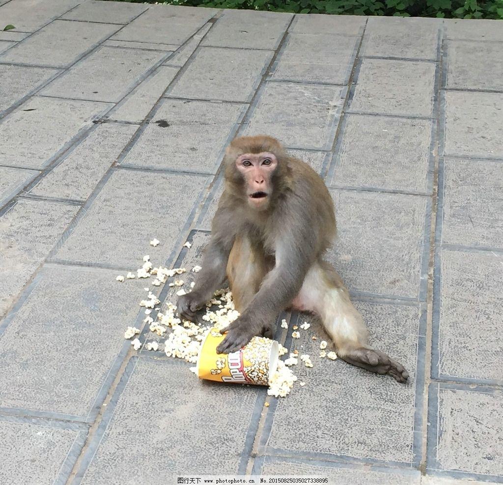 吃东西的猴子图片_野生动物