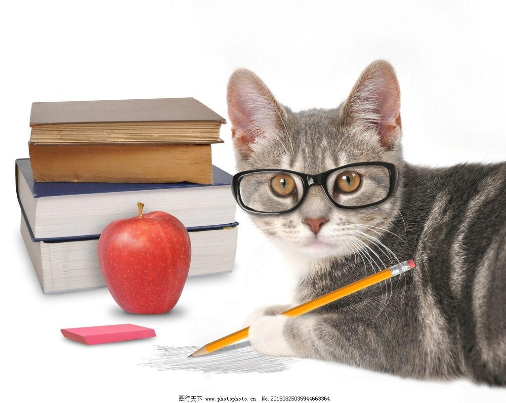 可爱猫咪宠物海报