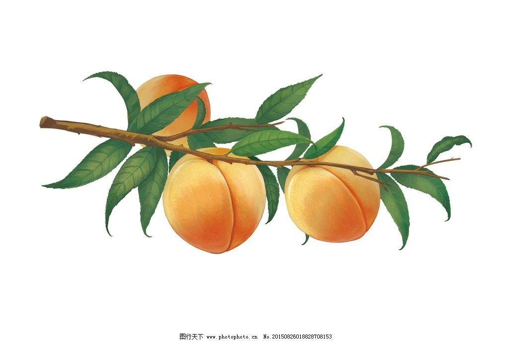 手绘黄桃图片