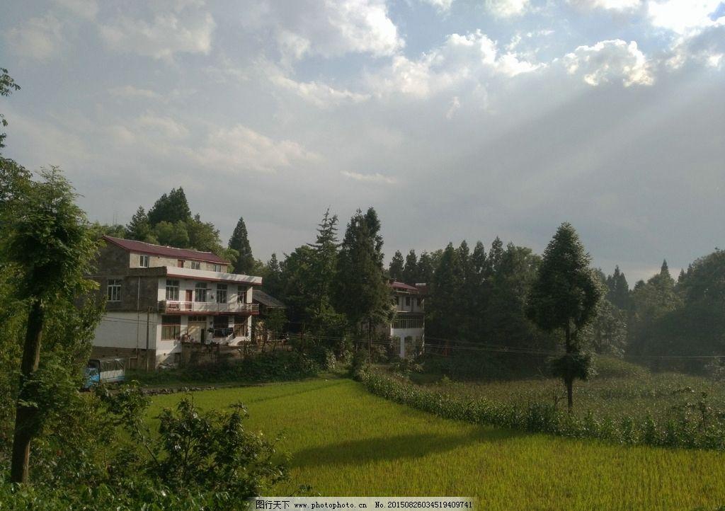 稻田 房屋 风景 树木 阳光 摄影 自然景观 田园风光 72dpi jpg