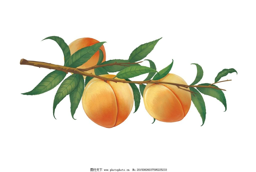 手绘黄桃 原创 水果 写实 文化艺术 传统文化