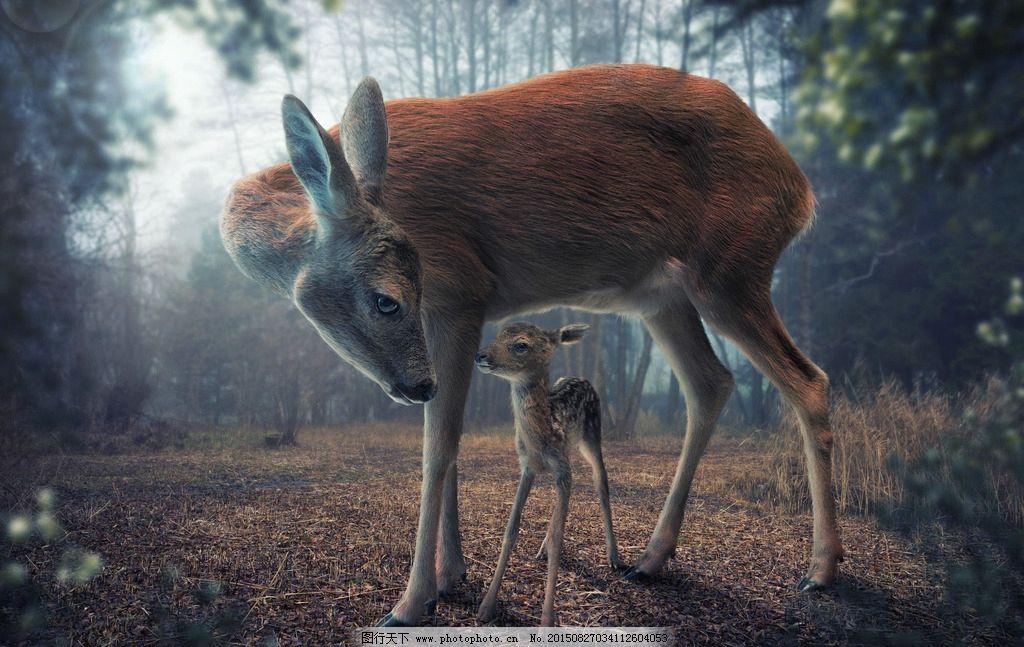 鹿 森林 树木 动物 背景图片 摄影 旅游摄影 自然风景 75dpi jpg