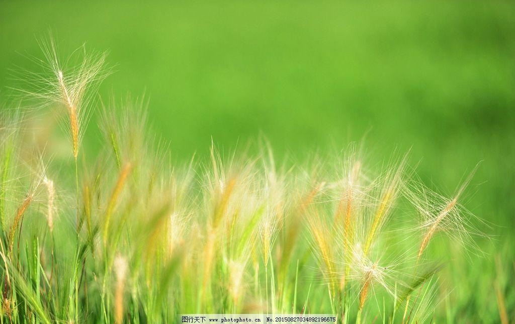 花与草的世界