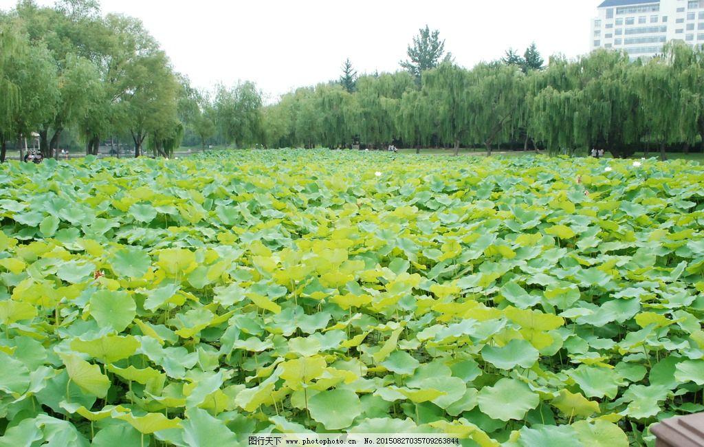荷花 美丽 大自然 美景     镜头中的世界 摄影 生物世界 花草 300dpi