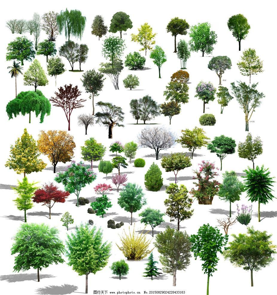 植物 园林 psd 大乔木 景观 设计 自然景观 建筑园林 300dpi psd