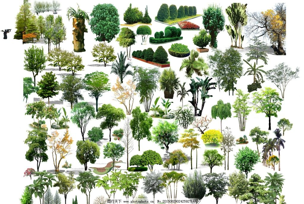 园林 植物 psd 乔木 景观 设计 自然景观 建筑园林 300dpi psd