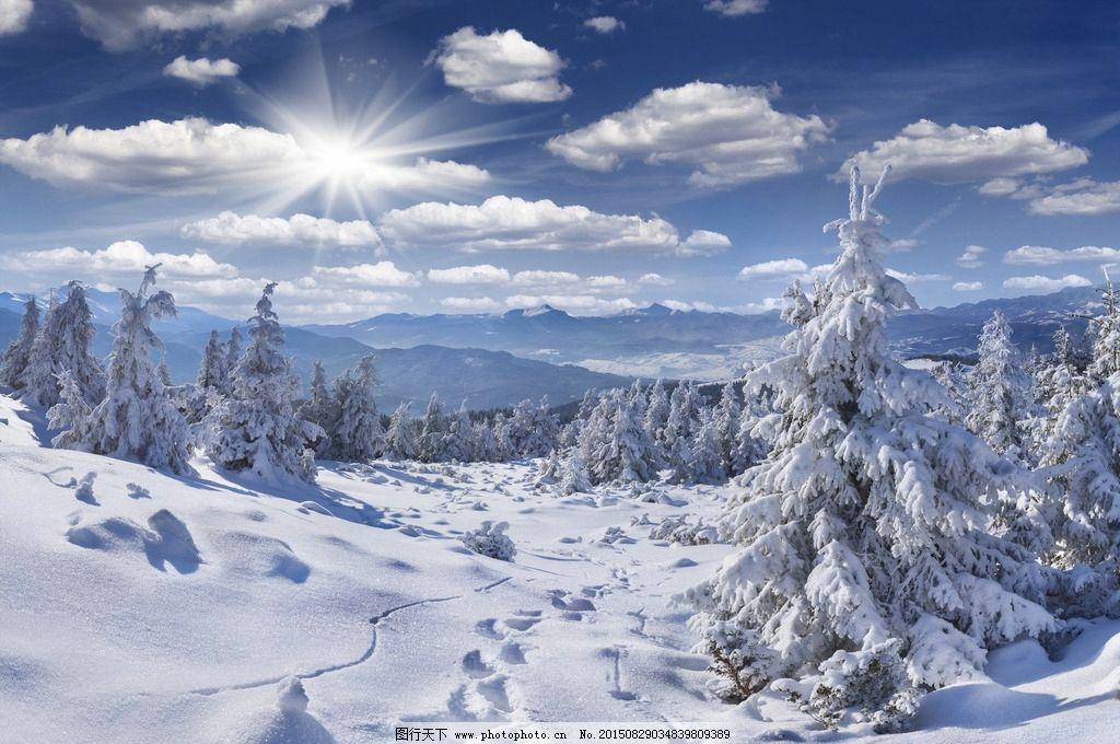 冬天冰雪 冬天 冰雪 雪地 雪松 松树 雪松树 树木 大树 积雪 白雪