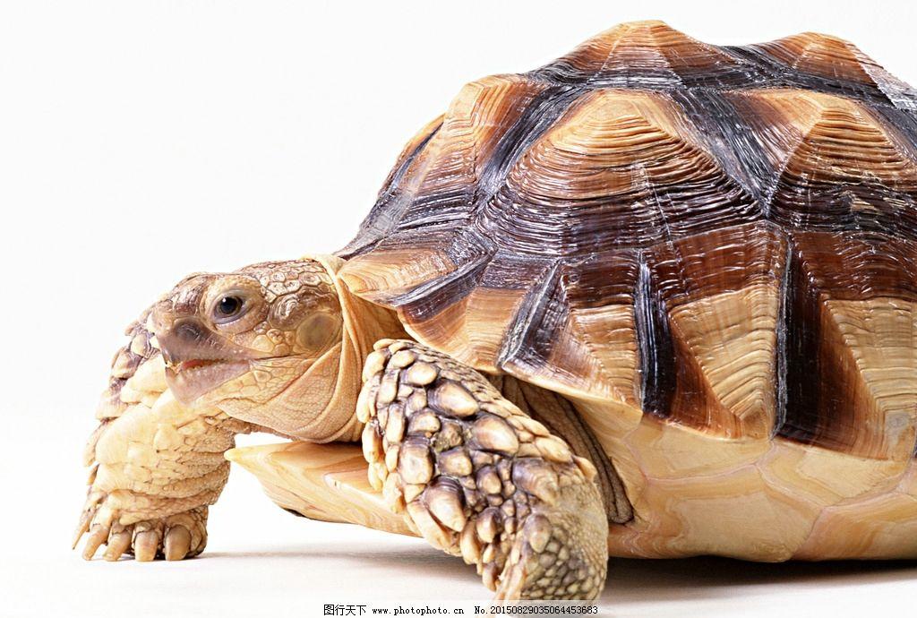 龟 乌龟 动物 龟照片 金钱龟 鳄龟 摄影 生物世界 野生动物 350dpi