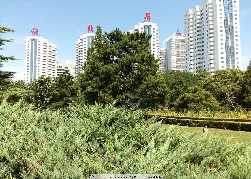 小区景观 小区环境 绿色植物 松树 小区园林 高楼 园林建筑集锦 摄影