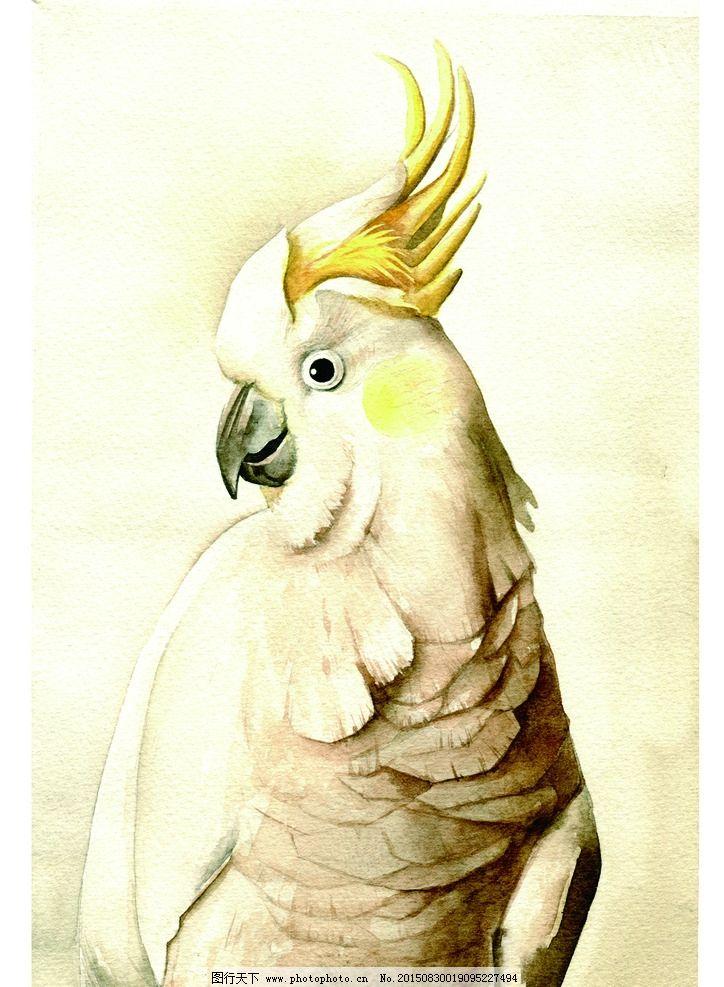 鹦鹉 手绘 鸟 灰色 动物 俏皮 卡通 韩版 共享图片