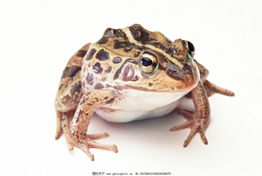旅行青蛙可爱壁纸