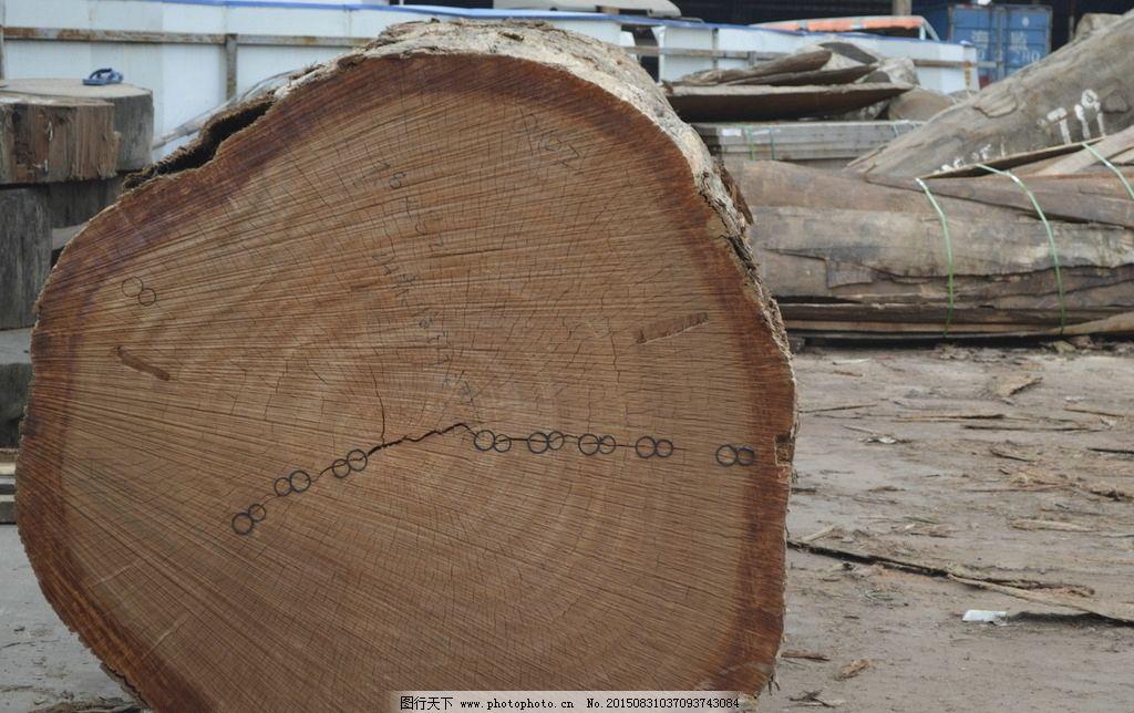 圆木纹理 圆木 木材厂 木材 板材 原木 木头 木材纹理 木头纹理 摄影