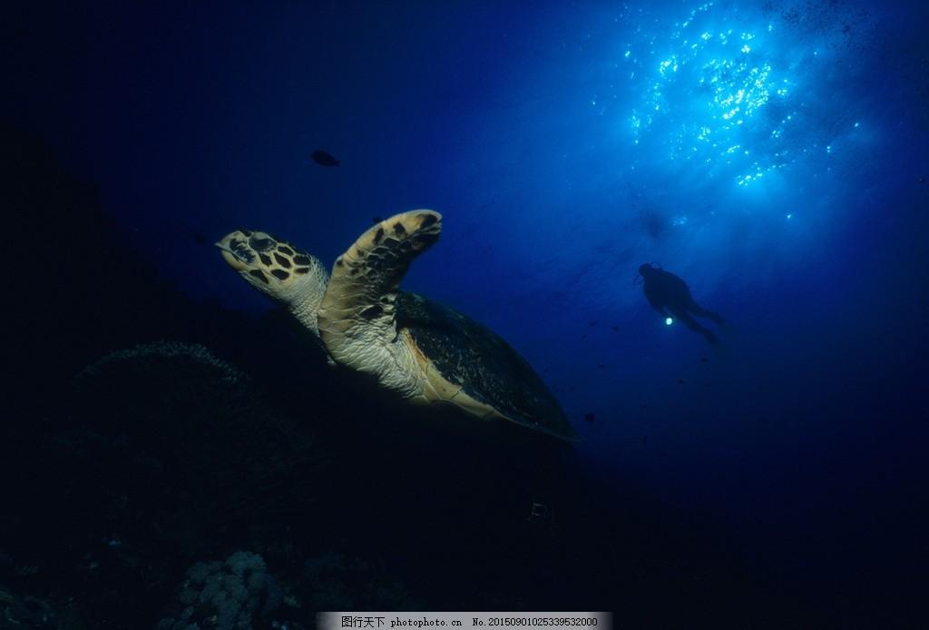 海底动物 海底鱼类 海底世界 海底世界素材 海底高清壁纸 海底世界