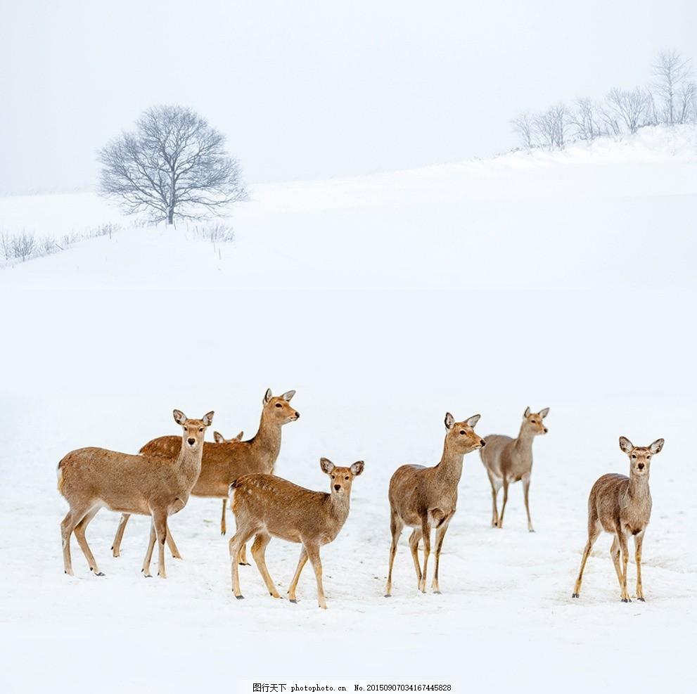冬天动物简笔画大全