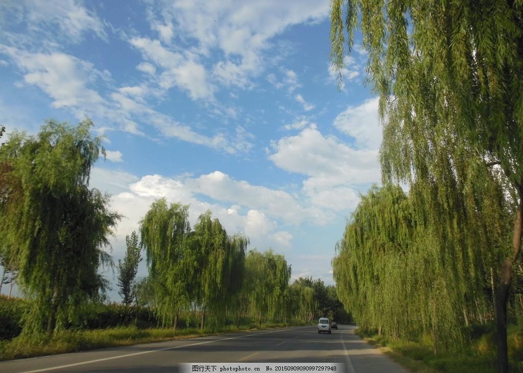 公路风景 大路 道路 蓝天 垂柳 柳树 树木 天空 ?#33258;?云朵