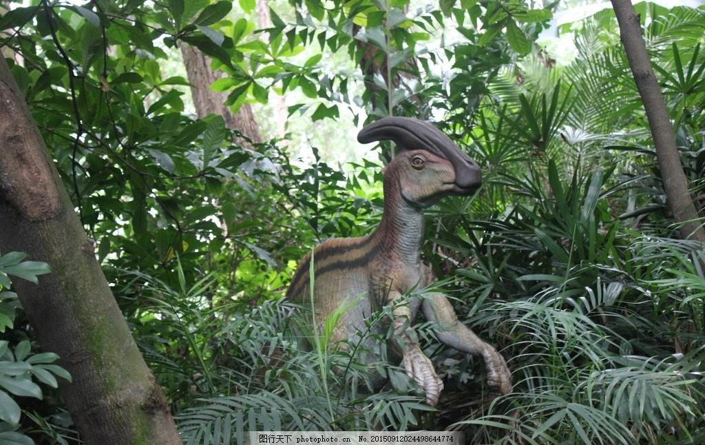 恐龙 动物园 广州长隆 香江动物公园 森林 摄影 生物世界 野生动物 72